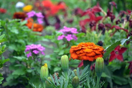 Nuremberg Flowers