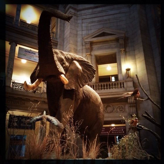 Elephant display at the Natural History Museum.  How dramatic!!